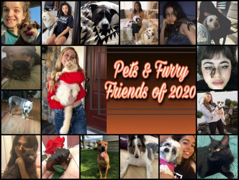 East Rockaway and our Pets!