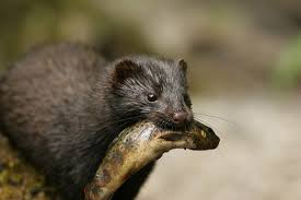 """""""What the Mink?"""""""
